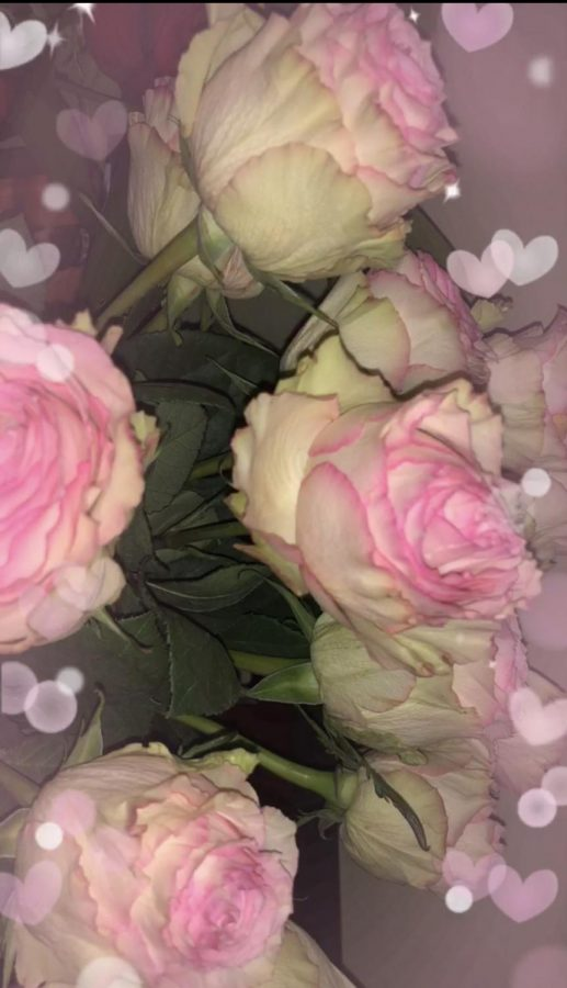 White+%26+pink+roses+can+signify+pure+tenderness.+Perfect+to+give+to+a+friend+or+even+a+family+member%21