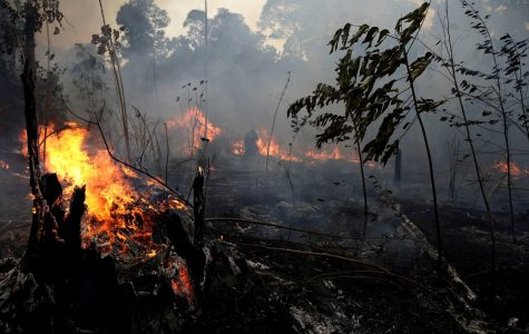 What effects will the Amazon fires have on the world?